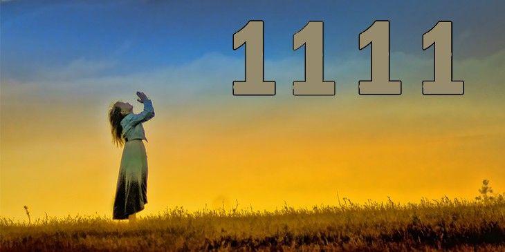 el portal 11-11-2020